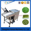 Experienced Green Bean Cutter Machine China Supplier