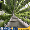Double Lines Hydroponic Growing Systems for Commercial Greenhouse