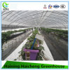 Hot Sales Arch Greenhouse with Irrigation System