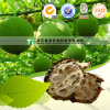 Dried Herbal Medicine for Pregnant Women Snakegourd Fruit