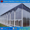 Low Cost Polycarbonate Greenhouse for Flower Growing