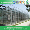 Polycarbonate Sheet Greenhouse for Tomato and Cucumber Growing