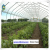 Tunnel Hydroponic Plastic Film Greenhouse