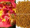 Top Level Bee Pollen, 100%Natural Tea Bee Pollen, No Antibiotics, No Heavy Metals, No Pathogenic Bacteria, Whitening, Anticancer, Prolong Life, Health Food