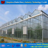 Glass Green House Galvanized Steel Frame Greenhouse Rose Farming