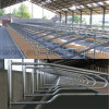 Cattle Free Stall with Good Quality