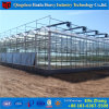 Brand New Glass Greenhouse for Sale Covering Made in China