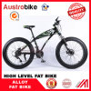 Fat Bike Mountain Bike