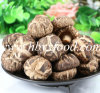Healthy Food Thin Tea Flower Mushroom Producer