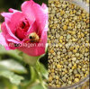 Top 100% Wild Rose Bee Pollen- Queen Pollen,No Antibiotics, No Heavy Metals, No Pathogenic Bacteria, Anticancer, Whitening, Anti-Aging,Prolong Life,Health Food