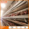 Auto Battery Cage Poultry Farm Machinery for Layers