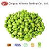 Frozen Soy Beans Kernel Grade a