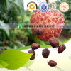100% Pure Natural Herb Medicine Lychee Seed