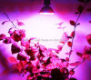 80LED AC110/220V 4W Blue: Red=64: 16 Hydroponic Grow Light