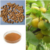 Apricot Seed Extract/98% Amygdalin in Stocks