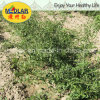 Medlar Lbp USDA Nof Organic Dried Goji
