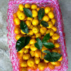 New Crop Nanfeng Small Sweet Baby Mandarin
