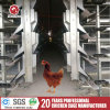Automatic H Type Chicken Cage for Laying Hens with Long Time Used