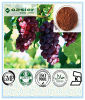 Best-Selling Grape Seed Extract, Gse, 95%OPC (OSA-006)