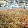 Quality Broiler Automatic Poultry Feeding Equipment From Factory