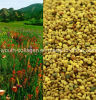 Top Pollen 100% Natural Wild Mountain Flower Bee Pollen, No Antibiotics, No Pesticides, No Pathogenic Bacteria, Prolong Life, Health Food