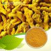 Plant Extract Curcumin (CAS 458-37-7)