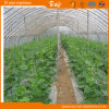 China Supplier Arch Green House with Hot Galvanized Frame