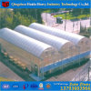 Polycarbonate Sheet PC Used Commercial Greenhouse with Hydroponic System for Angriculture&Aquaponics&Cucumber