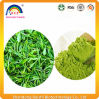 Plant Extract Matcha Green Tea Powder