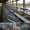 Comfortable Cow Free Stalls for Dairy Farm Equipment
