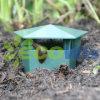 Vegetable Garden Safe Snail and Slug Trapper