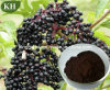 Elderberry Extract Anthocyanidins 3% ~ 25% by UV