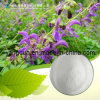 Natural Salvia Miltiorrhiza Extract Protocatechuic Aldehyde 98%