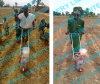 The Latest Version Single Row and Double Row Push Corn Seeder