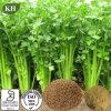 Celery Seed Extract: 6: 1, 10: 1, Apigenin 2%-5%