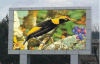 Outdoor Full Color Waterproof P8 HD LED Billboard for Advertising