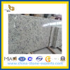 White Rose Granite Countertop for Kitchen or Bathroom