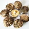 Top Quality Factory Price 5-5.5cm Dried Smooth Shiitake Mushroom