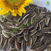 Sell Inner Mongolia Non-Gom Sunflower Seeds5009