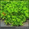 Artificial Hedge Green Fence for Garden