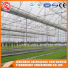 Commercial Multi-Span Garden Plastic Film Greenhouse