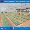 Single Span Plastic Film Tunnel Greenhouse for Vegetables