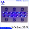 LED 10W Grow Chip Plant Grow Light Full Spectrum High Power LED Grow Light for Indoor Plant