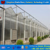 Multi-Span Hydroponics PC Sheet Agricultural Greenhouses