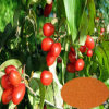 Male Health: Wild Asiatic Cornelian Cherry Fruit Extract