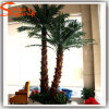 Indoor Decoration Mini Washington Palm Tree