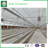 Polyethylene Greenhouse Hydroponics System for Vegetables/Flowers/Fruit