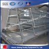Automatic a Type Chicken Layer Cage for Indonesia Poultry Farm