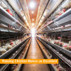 Hot Sales Professional Automatic H type Chicken Cage
