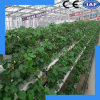 Low Cost High Quality Hydroponic System
